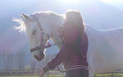 Ängstliches Pferd